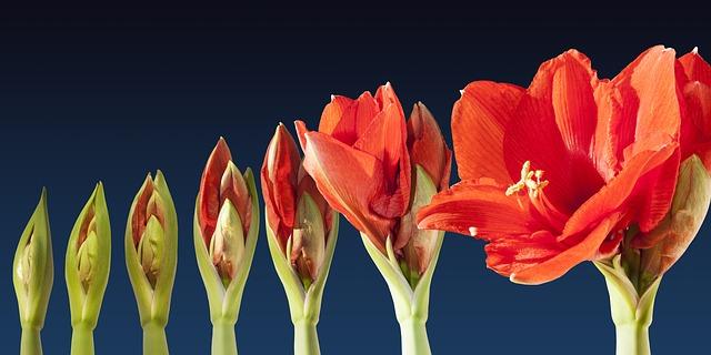 Image qui montre la croissance d'une fleur pour imager une séquence de courriels pour vendre.